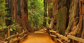 the-giant-redwoods